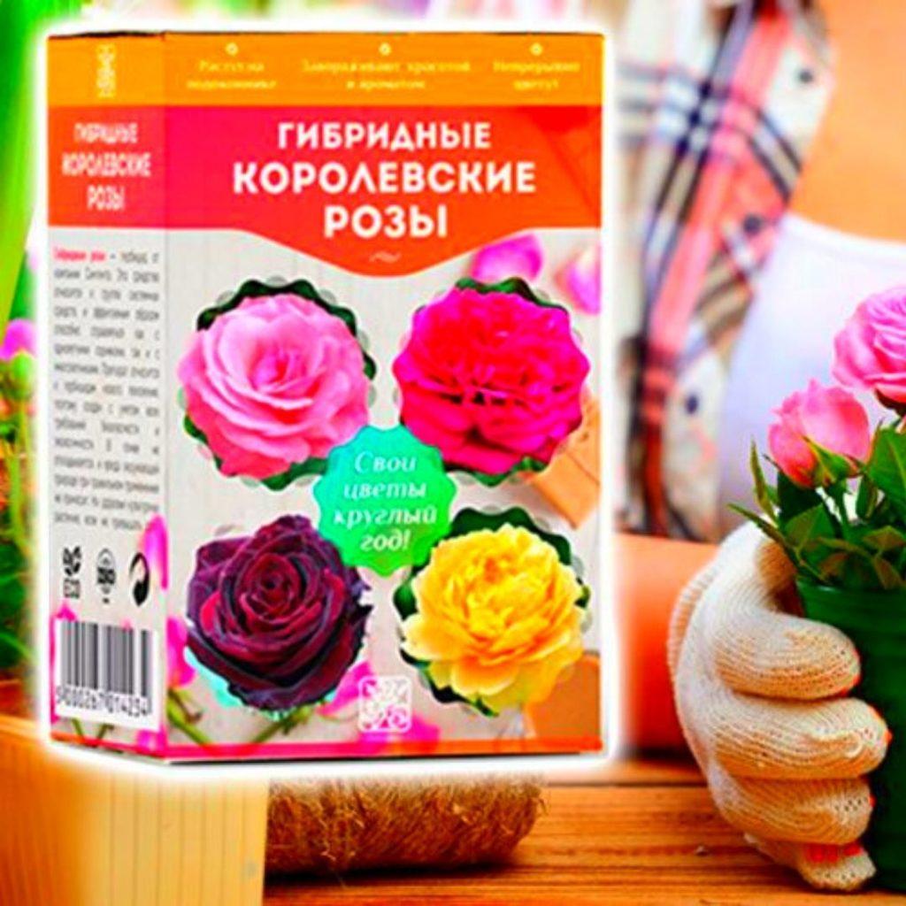 розы, гибридные королевские розы, королевские розы, саженцы роз, выращивание роз, гибридные королевские розы купить, гибридные королевские розы отзывы, королевские розы купить, королевские розы отзывы, гибридные розы, роза, семена роз, уход за розами, садовый мир, розы из семян, чайно гибридные розы, гибридные королевские розы на подоконнике, гибридные королевские розы свои цветы круглый год, посадка роз в открытый грунт, как вырастить розы из семян, посадка роз, посадка саженцев роз, черенкование роз, цветы, домашние цветы, комнатные растения, королевские розы что это, сад, комнатная роза, розы на подоконнике, как выращивать розы, посадка розы в горшок, rose, посадка розы весной в открытый грунт, роза куст, роза гибридная описание, зимостойкие сорта роз, семян, посадка роз в открытый, гибридные розы посадка, сад и дача, королевские гибридные розы реальные отзывы, хитрости, способ, посадка кустов роз, кусты роз купить, королевские розы смотреть, лучшие сорта роз, садовый гид, лучшие сорта роз для новичков, как укоренить розу, гибридный королевский сорта роз, форумхаус, сад и огород, роза на подоконнике, розы в домашних условиях, семена, огород, гибридные розы сорта, как ухаживать за комнатной розой, домашняя роза, выращивание роз в домашних условиях, процветок, королевские розы на подоконнике отзывы, саженцы роз купить, как размножить розу, купить розы по скидке, как посадить розу, елена матвеева, саженцы гибридных королевских роз, укоренение черенков роз, розы на окне, наталья петренко, где купить гибридные королевские розы, как вырастить розы, гибридные королевские розы на подоконнике купить, роза из семян, гибридные королевские розы на подоконнике отзывы, elena matveeva, выращивание роз из семечек, выращивание роз из семян, королевские розы дома, розы из семечек, potatoes rose, миф роза в картошке, propagate roses, rose in potato, проращивание роз, роза в картошке, посадка роз в грунт, посадка роз весной, розы посадка и уход, садоводство, укоренение роз в картошк